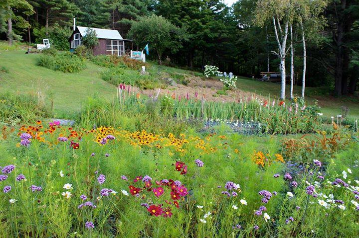Fundraiser by Peggy Heath Ogilvy : Song Garden Fundraiser