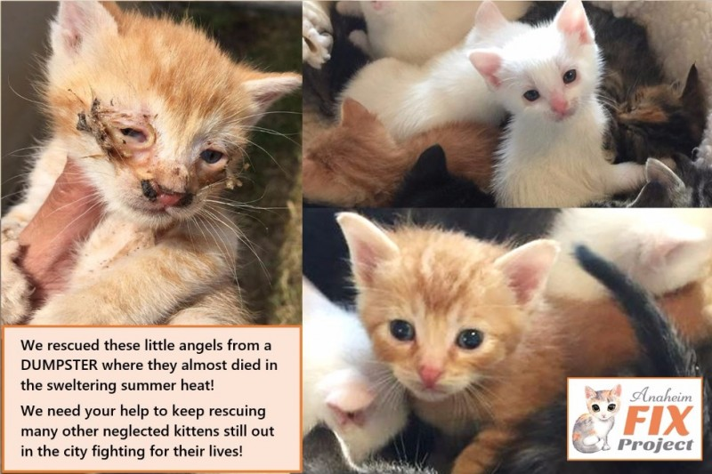 Petition update · CATS at RISK of Hypothermia & Death! · Change org