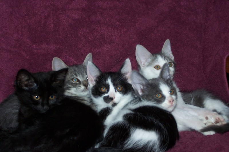 fundraiser by nancy v powell antioch ca animals deserve better