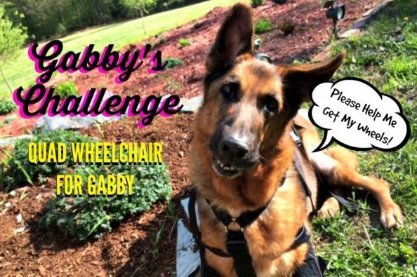 Fundraiser by Sindi Parker : GABBY'S CHALLENGE Wheelchair