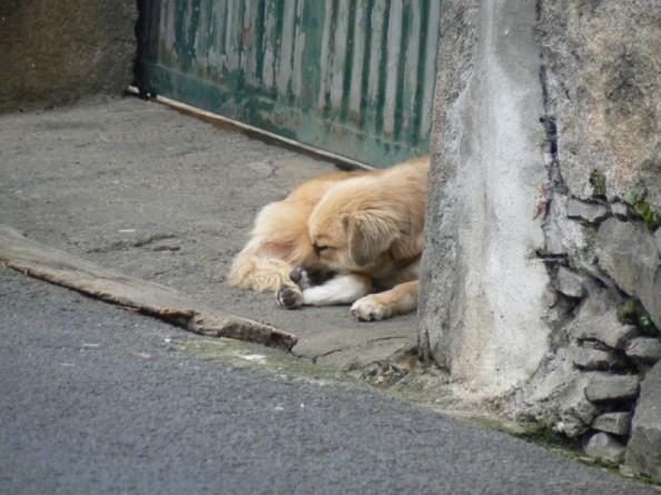 Dog Funeral Pet Memorials