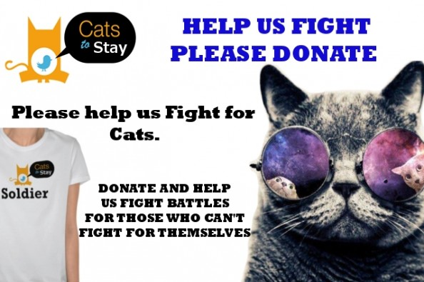 fundraiser by nikki money the cats to stay army world website