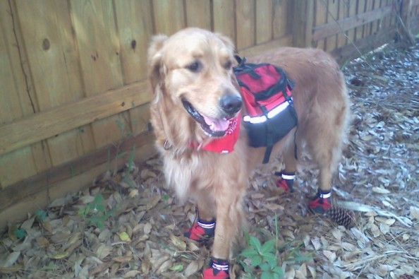 Fundraiser By Cynthia Goscinak Marsh Save Woofy From Kidney Failure