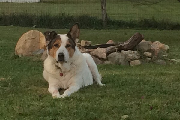 Fundraiser for Sean Willig by Deborah Wood : Dog with