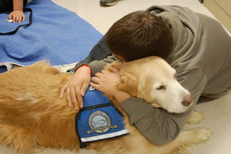 essay therapy dogs In dogs, signs of aggression include growling, showing the teeth, charging, barking, snarling, snapping, nipping, and biting going for a walk in the neighborhood provides so much stimulation in some dogs that it makes them feel more alert and aggressive.